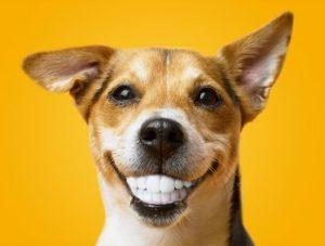 Limpieza dental mascotas Madrid