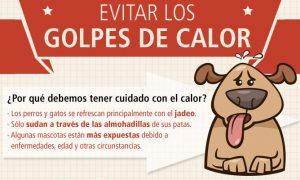 Prevenir un golpe de calor en tu perro