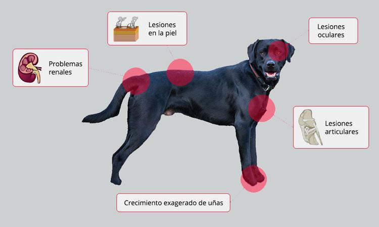 sintomas y diagnostico de leishmaniasis